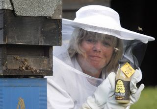 NO FEE Innocent Beekeepers 609