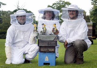 NO FEE Innocent Beekeepers 539